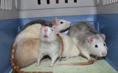 Tierheim Oberbottigen BE