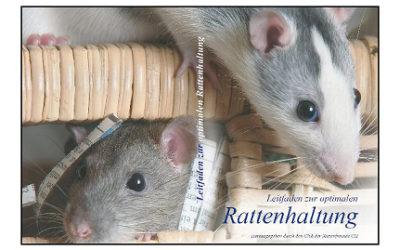 Leitfaden zur optimalen Rattenhaltung