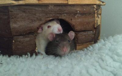 Zwei charmante Jungs