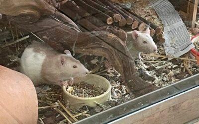 Helena Frey Stiftung für Tierschutz in Rümlang